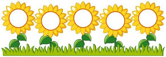 Sonnenblumengarten mit Schreibfläche vektor