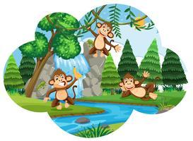 Freche Affen im Wald vektor