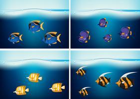 Fyra undervattensscener med olika typer av fisk vektor