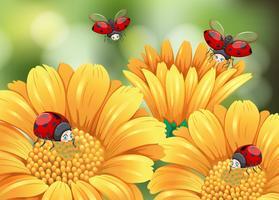 Marienkäfer, die in den Garten fliegen vektor