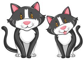 Zwei graue Katzen mit glücklichem Gesicht