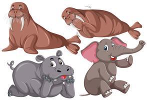 Set süße Tiere
