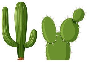 Två typer av kaktusplantor