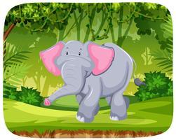 Elefant i djungeln vektor