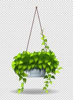 Topfpflanze, die an der Wand hängt vektor