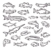 typ av havsmat, havsfiskhandgjord samling vektor
