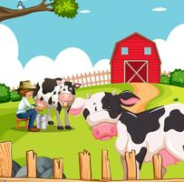Mann und Kühe auf dem Bauernhof