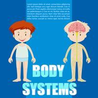 Infografisk av pojke och kroppssystem vektor
