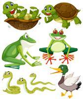 Set grüne Tiere vektor