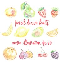Set von Bleistift gezeichneten Früchten und Beeren. Freihandzeichnung