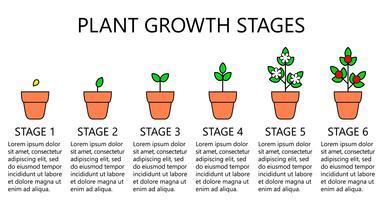 Pflanzenwachstumsstadien Infografiken. Linie Kunstikonen. Pflanzanleitung Vorlage. Lineare Artillustration lokalisiert auf Weiß. Obst pflanzen, Gemüse verarbeiten. Flaches Design-Stil.