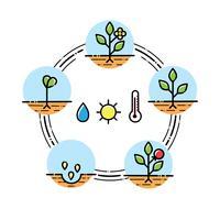 Pflanzenwachstumsstadien Infografiken Pflanzen von Obst und Gemüse verarbeiten. Flacher Stil