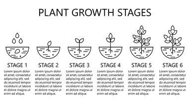 Pflanzenwachstumsstadien Infografiken. Linie Kunstikonen. Pflanzanleitung Vorlage. Lineare Artillustration lokalisiert auf Weiß. Obst pflanzen, Gemüse verarbeiten.