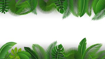 Bakgrund med textutrymme av tropiska löv. Lämplig för naturkoncept, semester och sommarlov. Vektor illustration