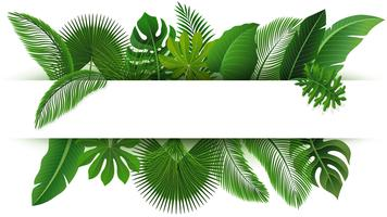 Unterzeichnen Sie mit Textraum von tropischen Blättern. Geeignet für Naturkonzept, Urlaub und Sommerurlaub. Vektor-Illustration