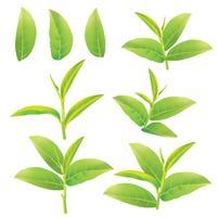 Blätter von grünem Tee vektor