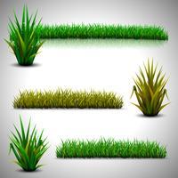 Grünes Gras isoliert