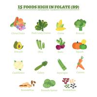 15 Lebensmittel reich an Folsäure vektor