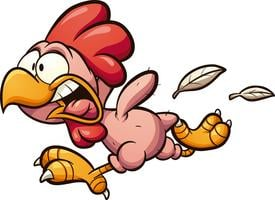 Huhn gezupft vektor