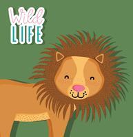Niedliche wild lebende Tiere des Löwes vektor