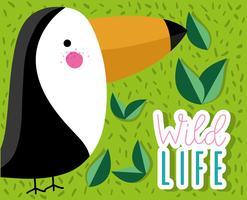 Netter Vogel der tucan wild lebenden Tiere vektor