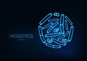 Probiotika under mikroskop. Gram positiv bakterier, baciller. Normal tarmflora, bifidobakterium.
