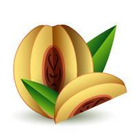 Papierschnitt der exotischen Frucht des tropischen Sommers des Vektors volumetrisch. Origami. Isolierte Farbe Objekt auf weißem Hintergrund. Orange Pfirsich Aprikose und Slice vektor
