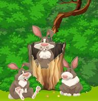 Tre kaniner i skogen