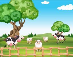Schafe und Kühe auf dem Feld