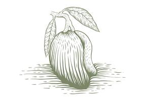 mango handritad vektorillustration