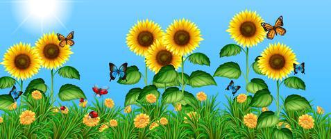Fjärilar som flyger i solrosfältet vektor