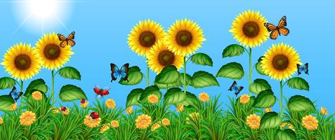 Schmetterlinge, die in das Sonnenblumenfeld fliegen vektor
