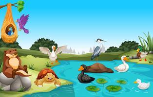 Många djur som bor vid dammet vektor