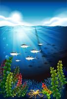 Szene mit den Fischen, die unter Wasser schwimmen