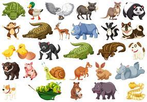 Uppsättning av djur karaktär vektor