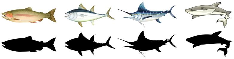 Reihe von verschiedenen Fischen vektor