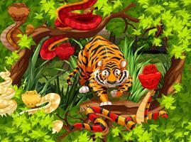 Vilda ormar och tiger i skogen