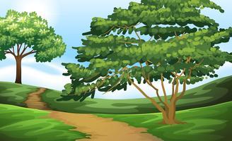 Feldweg auf dem grünen Gebiet