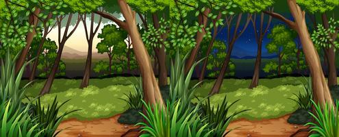 Skogsbild på dagtid och nattetid