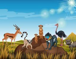 Många djur som står i fältet vektor