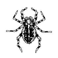 Svartvit spindel. vektor