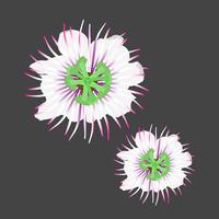 Vacker blomma vektorillustration