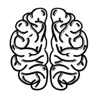 figur mänsklig hjärnanatomi till kreativa och intellekt vektor