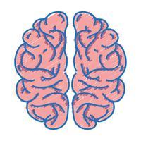 mänskliga hjärnans anatomi till kreativa och intellekt vektor