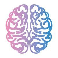 linje mänsklig hjärnanatomi till kreativa och intellekt vektor