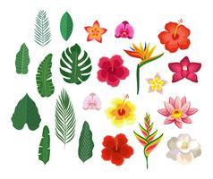 Tropiska blommor och bladsamling vektor