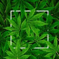 Marihuana- oder Hanf-Blatthintergrund vektor