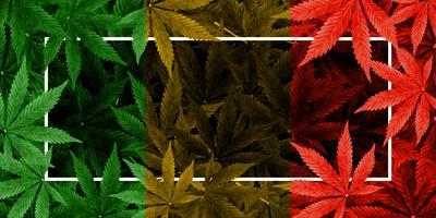 Marihuana- oder Hanfblattfarbhintergrund vektor