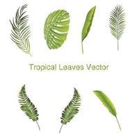Uppsättning av tropiska bladillustrationer vektor