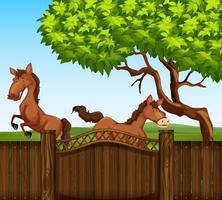 Två bruna hästar i fältet